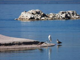 Salton Sea Habitat